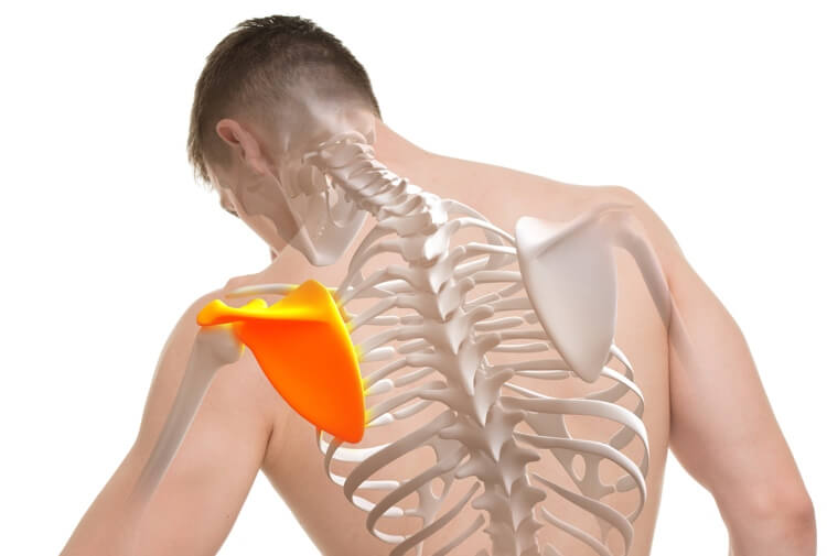 shoulderanatomy How to Make Your Shoulders Move Pain Free Again
